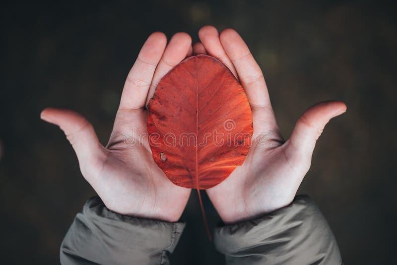 Het kleurrijke de herfstblad in vrouwen` s handen, sluit omhoog foto royalty-vrije stock afbeeldingen