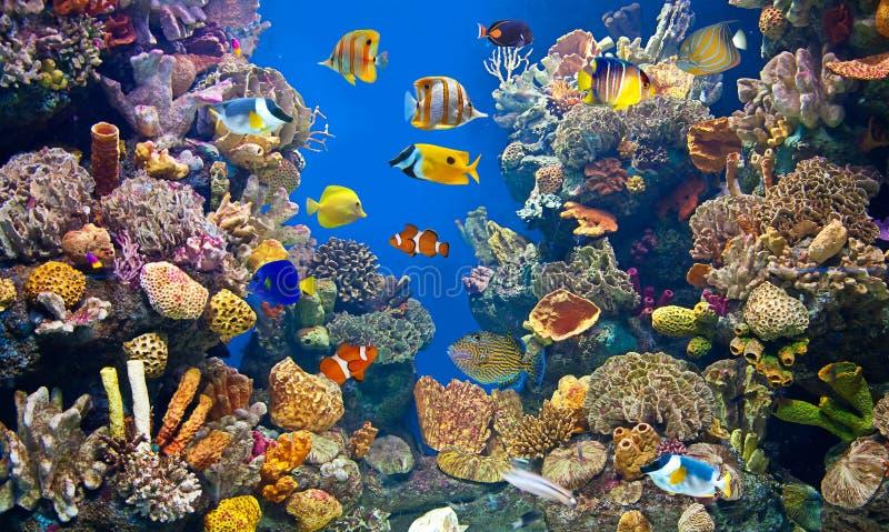 Het kleurrijke en trillende (grote) aquariumleven royalty-vrije stock foto