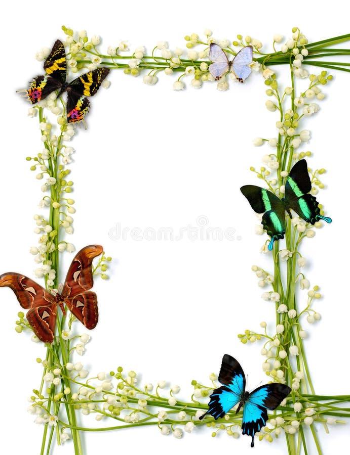 Het kleurrijke Frame van de Zomer met Vlinders royalty-vrije stock fotografie