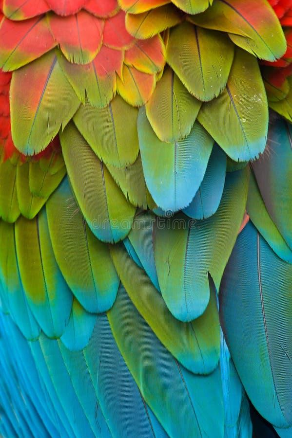 Het kleurrijke Gevederte van de Ara stock foto's