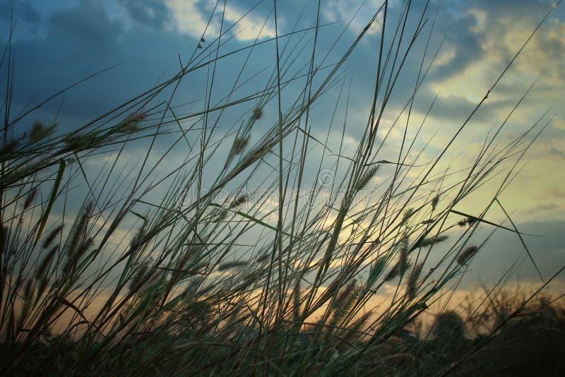 Het kleurrijke grasgebied bij ochtend het kijkt natuurlijk en winderig stock foto