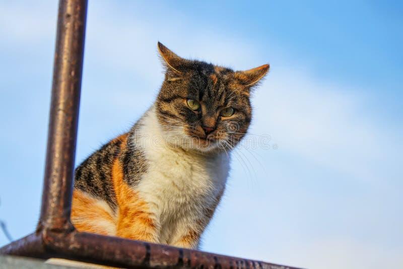 Het kleurrijke kat spelen op moordenaar met brutale mening over me Een binnenlandse kattenzitting op de plank in openlucht stock afbeelding