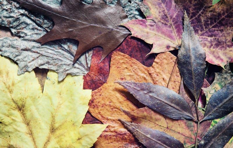 Het kleurrijke thema van de herfstbladeren royalty-vrije stock afbeelding