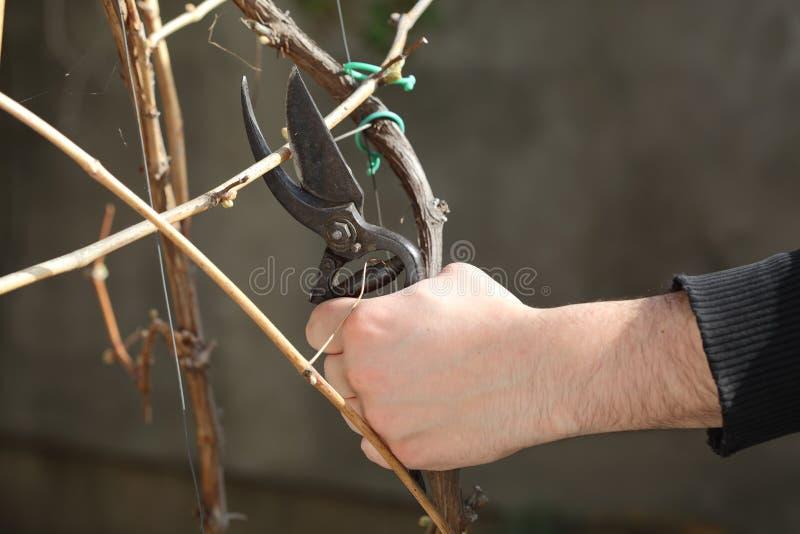 Het knipsel van de druif stock afbeeldingen