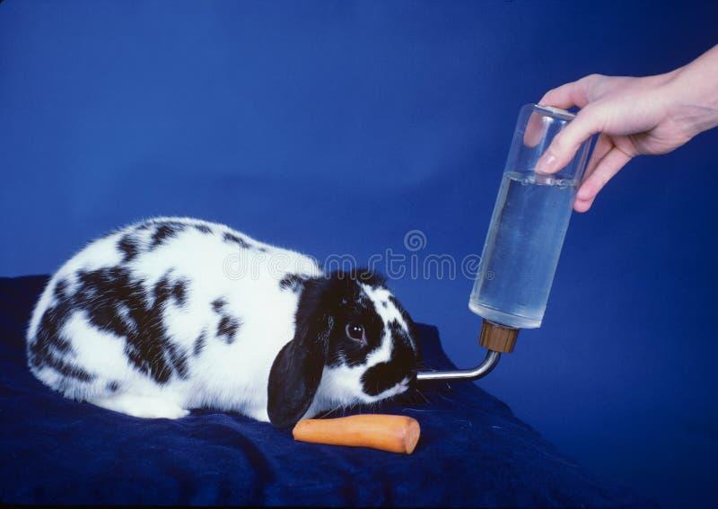 Het konijn krijgt Voedsel en Drank royalty-vrije stock fotografie