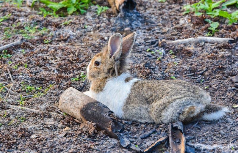 Het konijn ontspant royalty-vrije stock afbeelding
