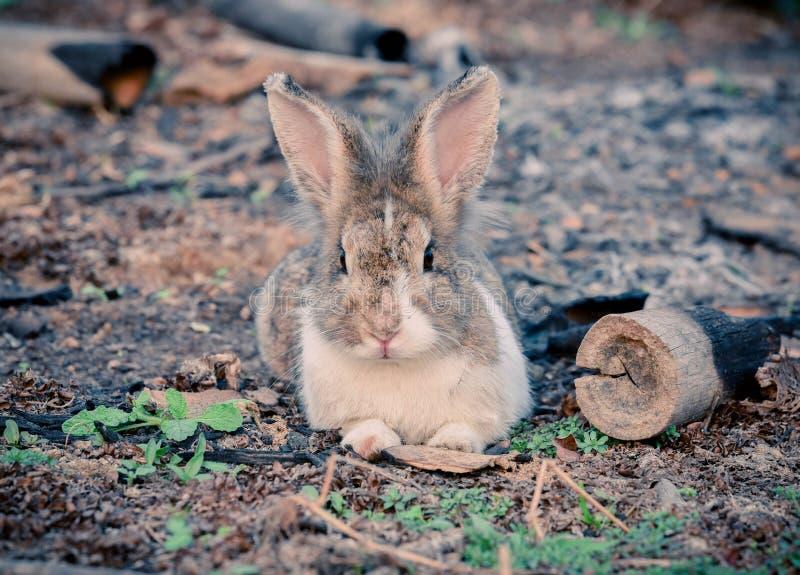 Het konijn ontspant royalty-vrije stock foto