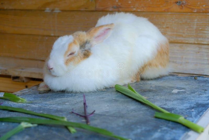 Het konijn rust stock afbeeldingen