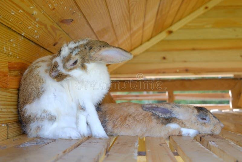 Het konijn rust royalty-vrije stock afbeelding