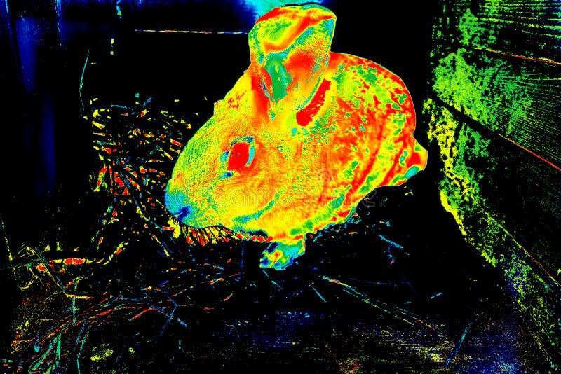 Het Konijn Thermische weergavecamera stock illustratie