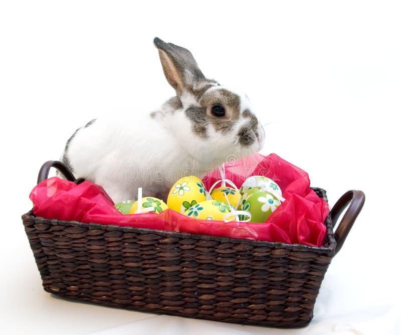 Het Konijn van Pasen stock afbeeldingen
