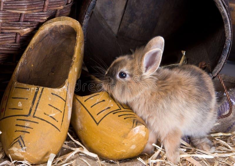Het konijntje van het landbouwbedrijf stock foto's