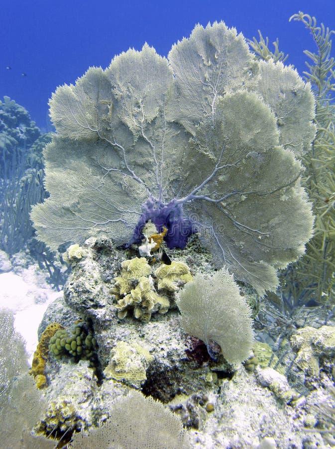 Het Koraal van Bonaire stock afbeeldingen