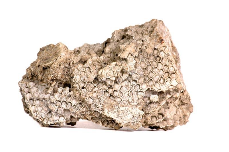 Het koraalfossiel van de honingraat royalty-vrije stock foto's