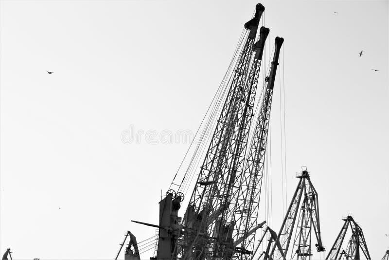 Het kranenwerk met containers, in de commerciële haven van Odessa stock foto