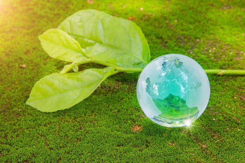 Het het kristalglas van de wereldbol op groen weelderig blad op mos en denkt glanst zon na De Dag van het Milieu van de wereld Gl royalty-vrije stock fotografie