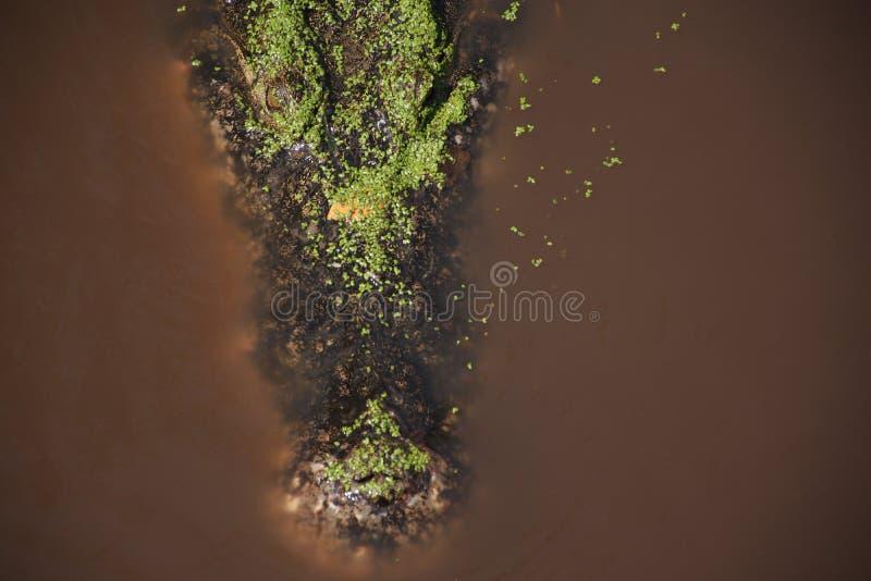 Het krokodil wachtende slachtoffer in het water royalty-vrije stock afbeeldingen