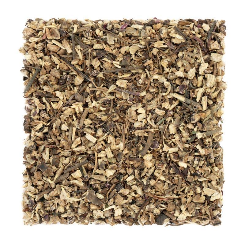 Het Kruid van de Echinaceawortel stock foto
