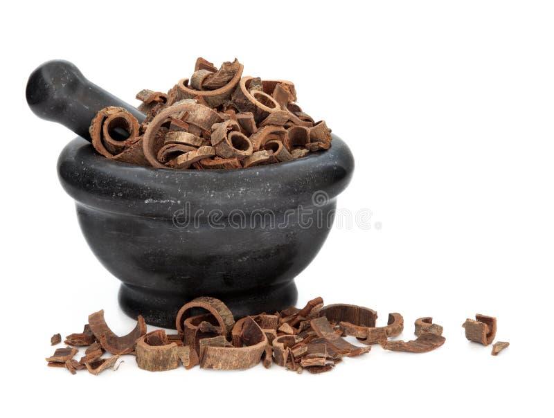 Het Kruid van de Schors van de magnolia stock afbeelding
