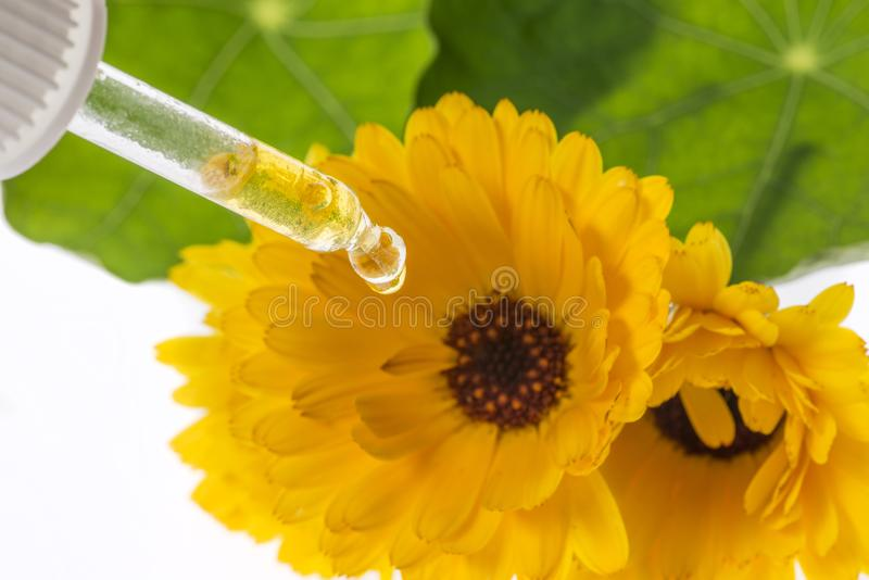 Het kruidenuittreksel van officinalis van Calendula van de goudsbloembloem royalty-vrije stock foto's