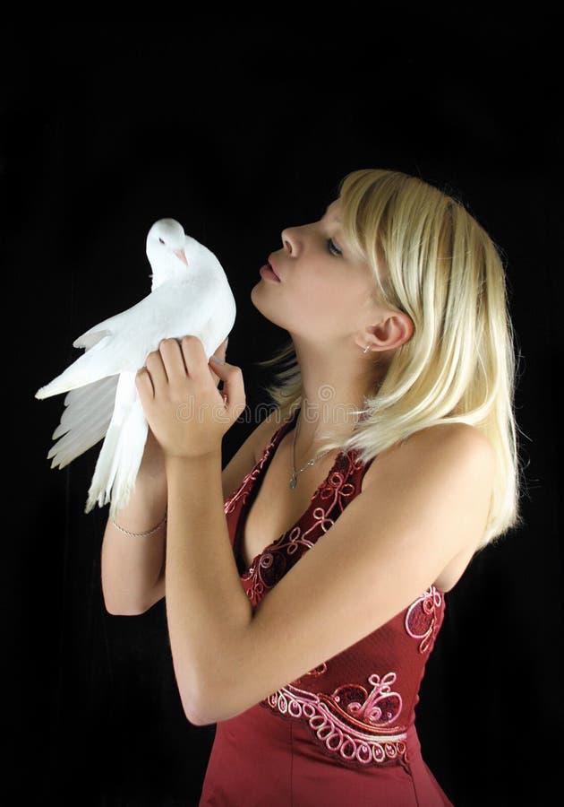 Het kussen van de vrouw duif stock afbeeldingen