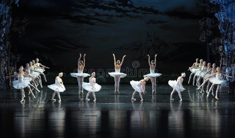 Het kust-Ballet van het zwaanmeer Zwaanmeer royalty-vrije stock fotografie