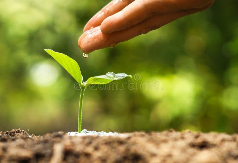 Het kweken van en het voeden van jonge plantzaailing royalty-vrije stock afbeelding