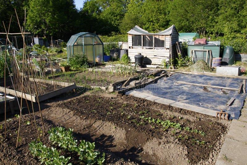 Het kweken van groenten in een toewijzing stock afbeeldingen