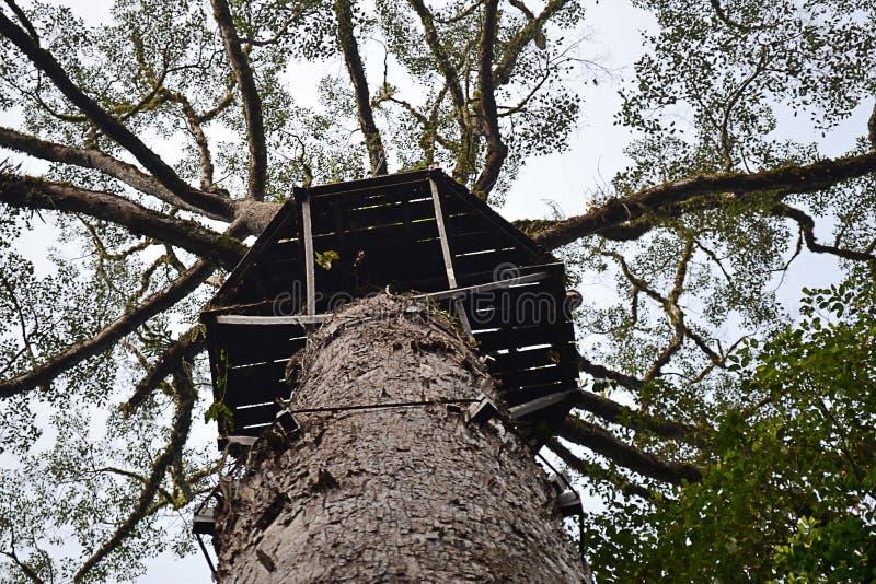 Het het laaglandregenwoud van Borneo is een ecoregion, binnen het tropische en subtropische vochtige broadleaf bossenbioma, van h stock afbeelding