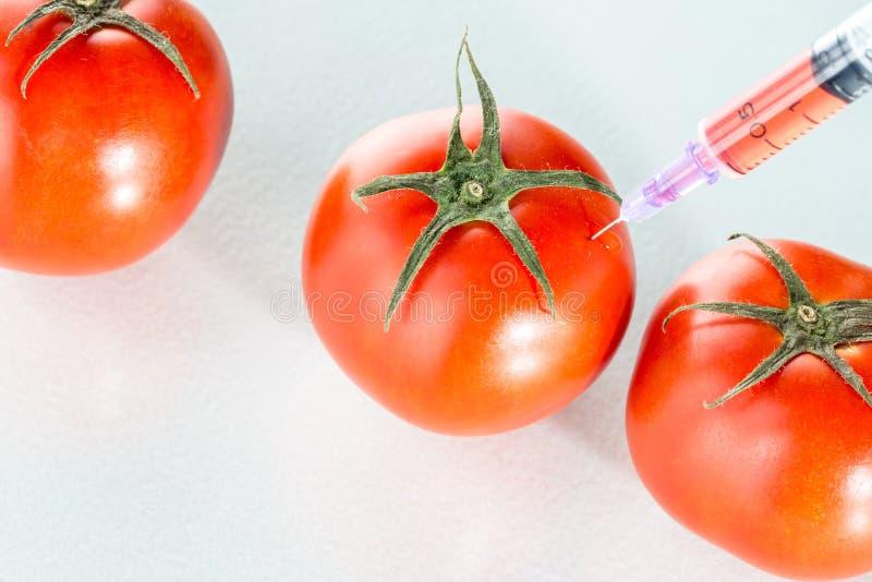 Het laboratoriumglaswerk van de genetische modificatie rood tomaat op wit stock afbeelding