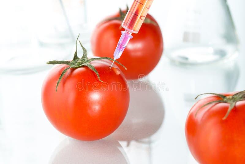 Het laboratoriumglaswerk van de genetische modificatie rood tomaat op wit royalty-vrije stock fotografie