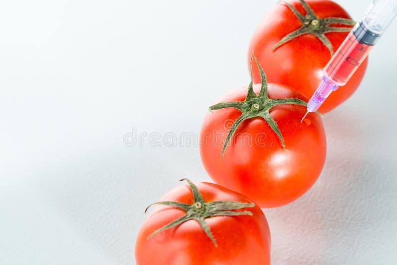 Het laboratoriumglaswerk van de genetische modificatie rood tomaat op wit stock foto's