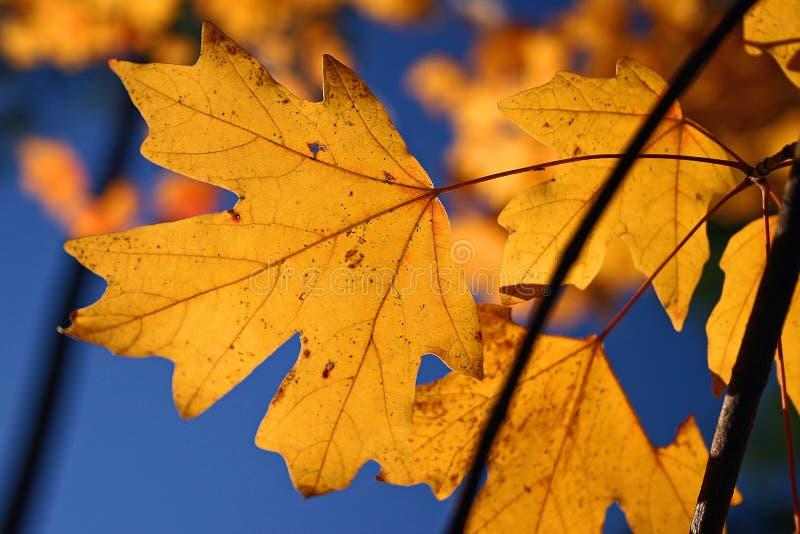 Het labyrint van de herfst stock foto