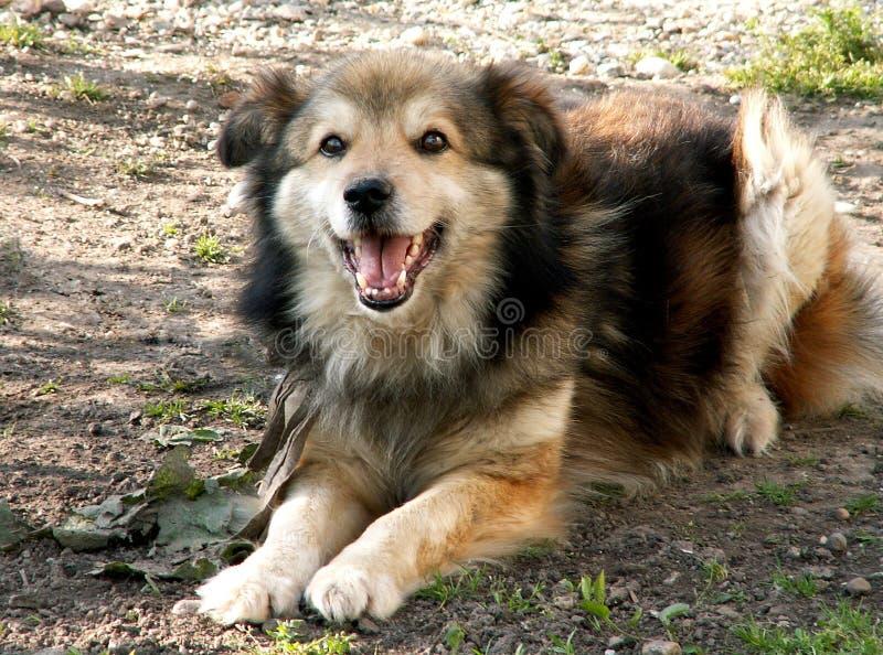 Het lachen hond stock afbeeldingen