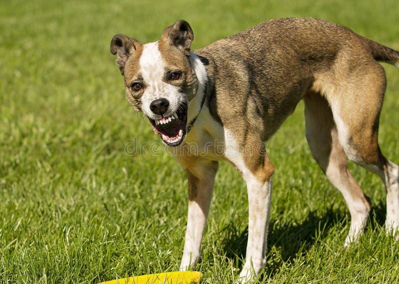 Het lachen hond stock fotografie