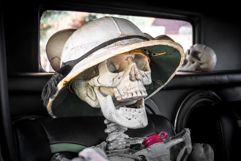 Het lachen Skelet met Safari Hat in een Auto stock foto's