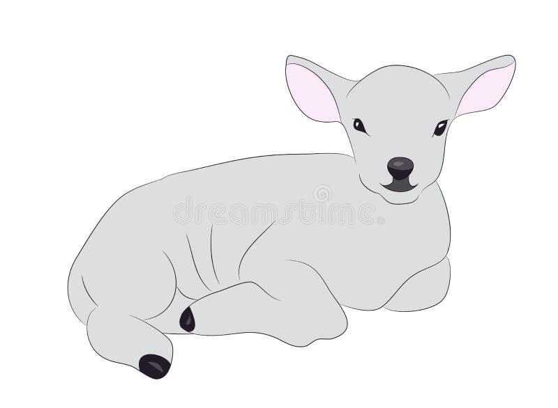 Het lam trekt kleur, vector royalty-vrije illustratie