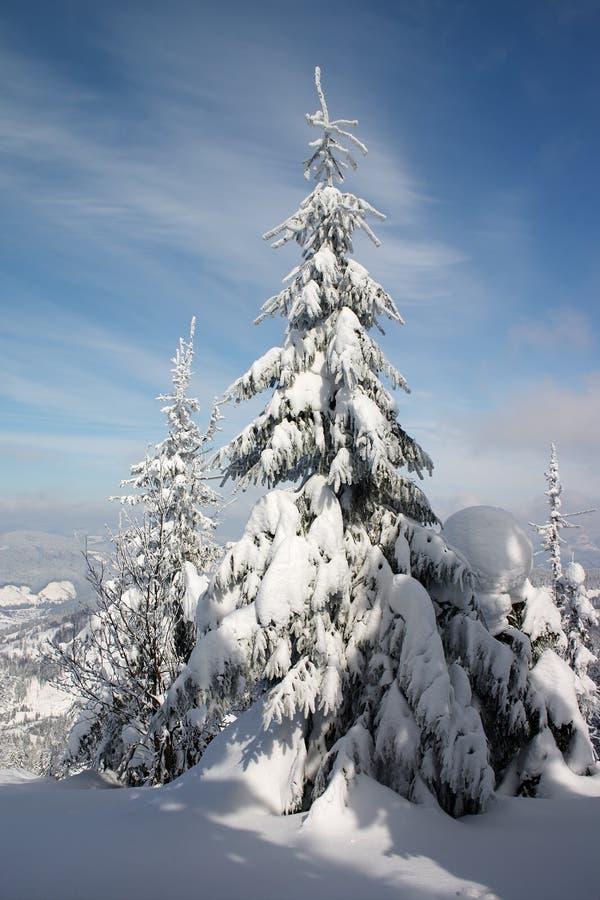 Het land en de bomen van de winter royalty-vrije stock fotografie