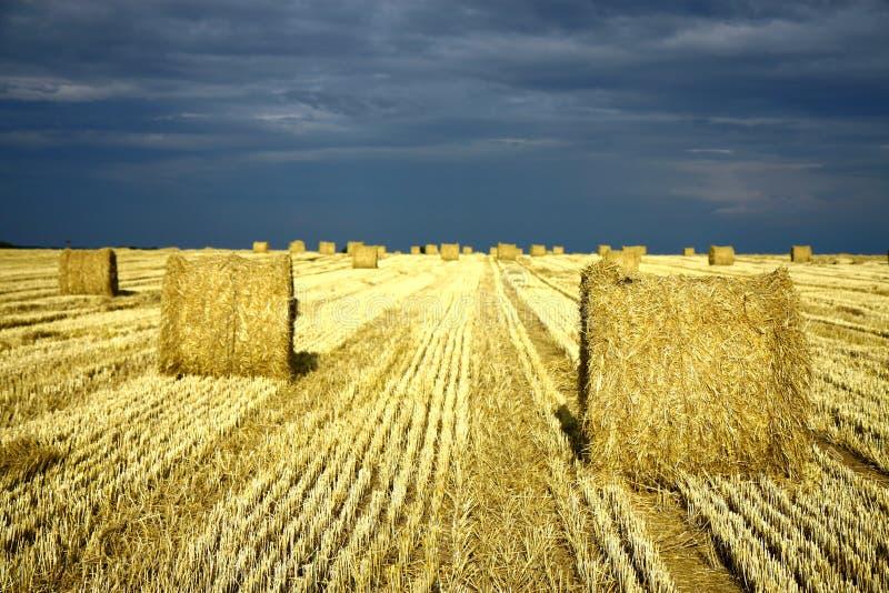 Het land van de landbouw met strobroodjes royalty-vrije stock fotografie