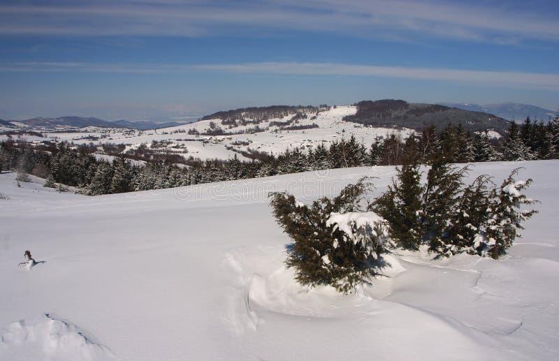 Het land van de winter stock fotografie