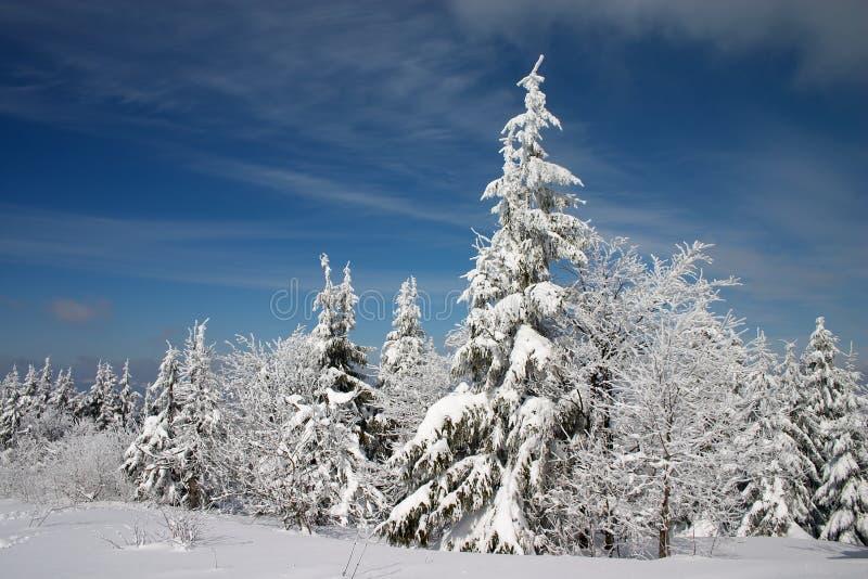 Het land van de winter en sneeuwbomen royalty-vrije stock afbeeldingen