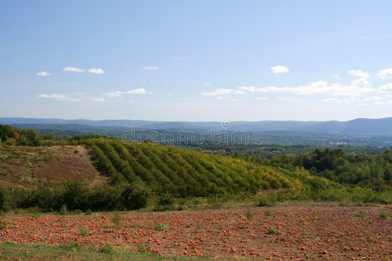 Het Land van het landbouwbedrijf stock foto