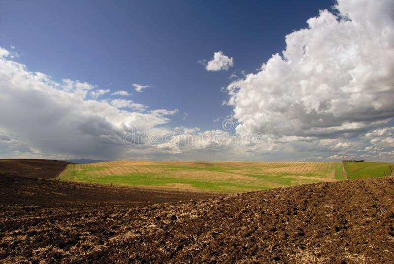 Het Land van het Landbouwbedrijf van Californië royalty-vrije stock afbeeldingen