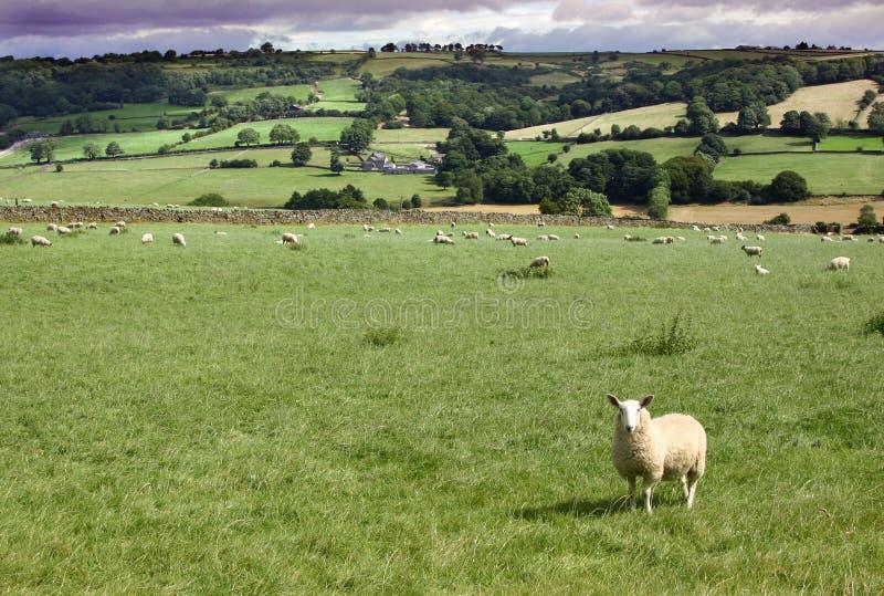 Het land van Yorkshire stock foto's