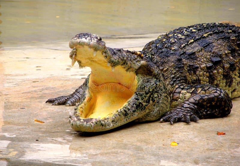 Het Landbouwbedrijf en de Dierentuin van de Krokodil van Samutprakan royalty-vrije stock foto