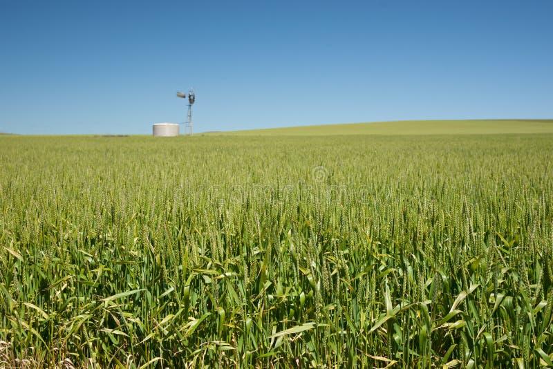 Het landbouwbedrijf heeft gebieden van tarwe royalty-vrije stock foto's