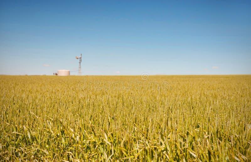 Het landbouwbedrijf heeft gebieden van tarwe royalty-vrije stock afbeelding