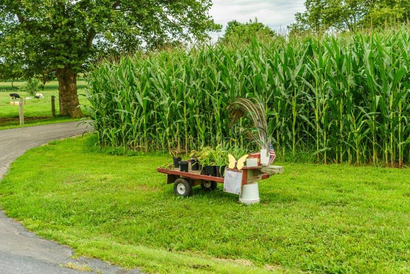 Het landbouwbedrijf van het Amishland, kleine ding voor verkoop, van de gebiedslandbouw en het weiden koeien in Lancaster, PA stock foto