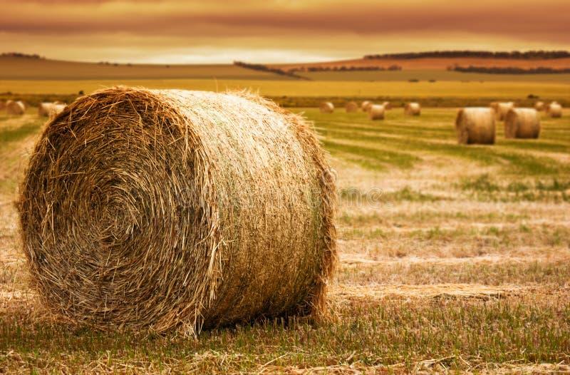 Het Landbouwbedrijf van de Baal van het hooi stock afbeelding