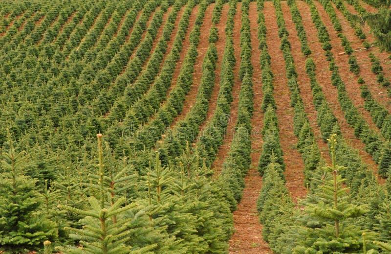 Het Landbouwbedrijf van de boom stock afbeeldingen